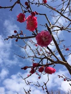 節分そして立春へ